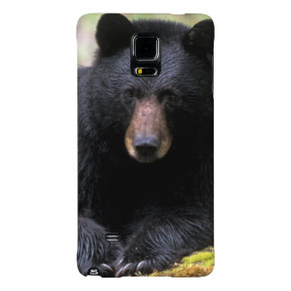 Black bear on an old growth log in the