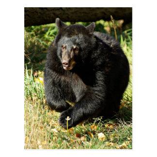Black Bear on the Run Postcard