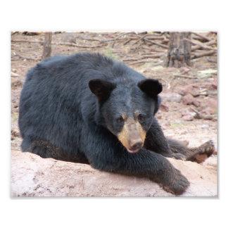 Black Bear Photo Print