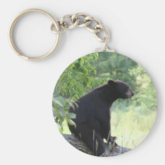 black bear sitting in tree keychain