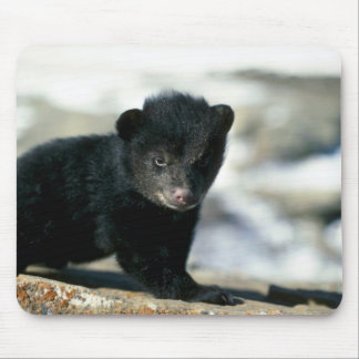 Black Bear-small cub Mouse Pad