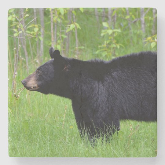 Black Bear Stone Coaster