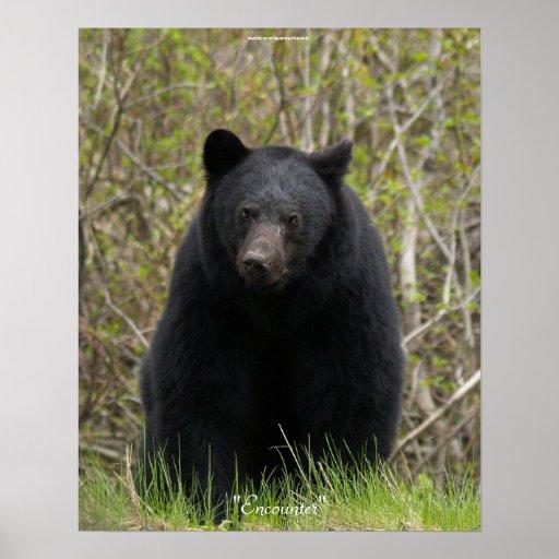 BLACK BEAR Wildlife Animal Photo Poster