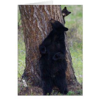 Black Bears, Sow and Cub Card