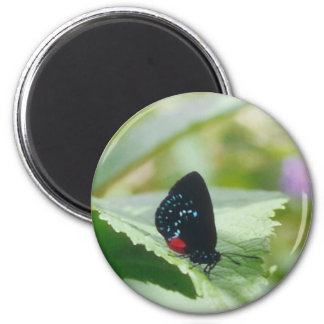 Black Beauty - Atala butterfly - magnet