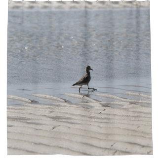 Black-bellied Plover at low tide