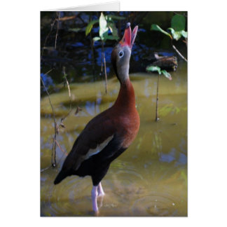 Black-bellied Whistling Duck Card