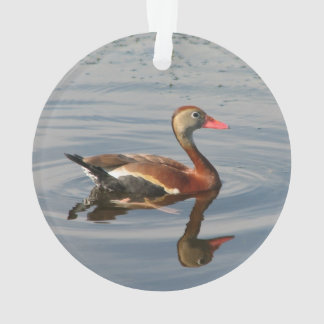 Black-bellied Whistling-Duck Ornament