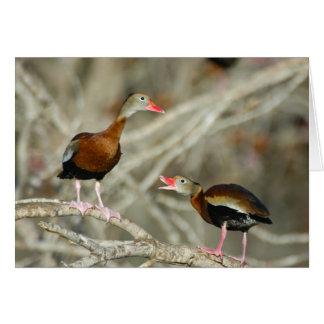 Black-bellied Whistling-Ducks Card