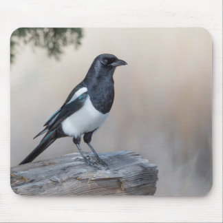 Black-billed Magpie Mouse Pad