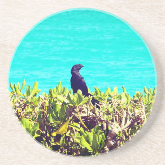 Black Bird on A Bush Coaster