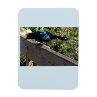 Black bird photo magnet