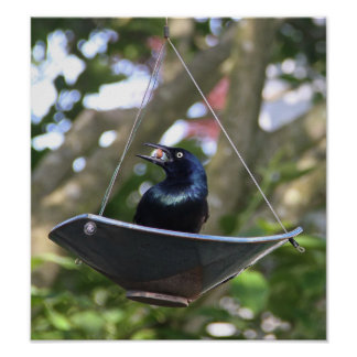 Black Bird Singing in the Dead of Night! Poster