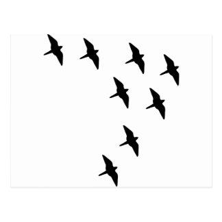black birds postcard