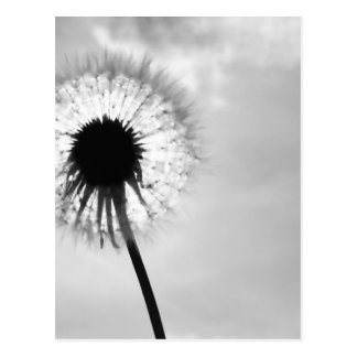 Black blank dandelion Black and White Dandelion Postcard