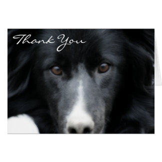 Black Border Collie Face Dog Thank You Card