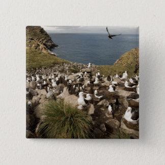 Black-browed Albatross, Thalassarche 2 Inch Square Button
