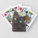 Black Burmese Cat Moose Bicycle Card Deck