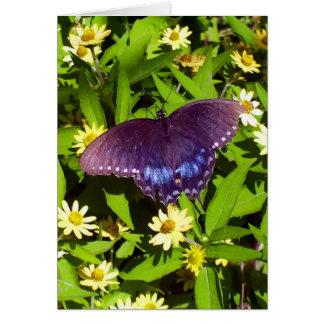 Black Butterfly On Flowers Card