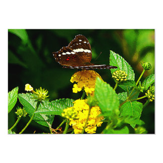 Black Butterfly on Yellow Lantana Custom Announcement