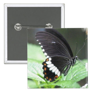 Black Butterfly Square Pin