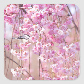 Black Cap Chickadee & Pink Weeping Willow Square Sticker