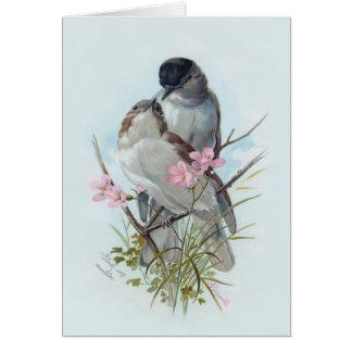Black Cap Warblers Card