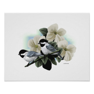 Black Capped Chickadee Art Poster