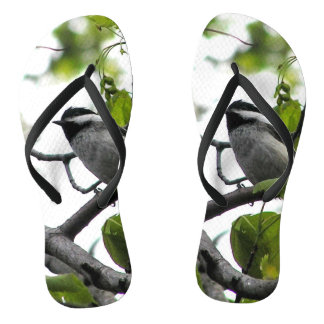 Black Capped Chickadee Flip Flops