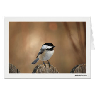 Black Capped Chickadee Greeting Card