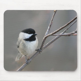 Black Capped Chickadee Mouse Pad