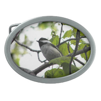 Black Capped Chickadee Oval Belt Buckles