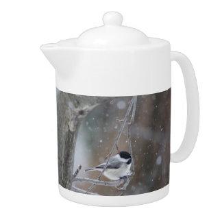 Black-capped Chickadee - Songbird