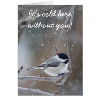 Black-capped Chickadee - Songbird Card