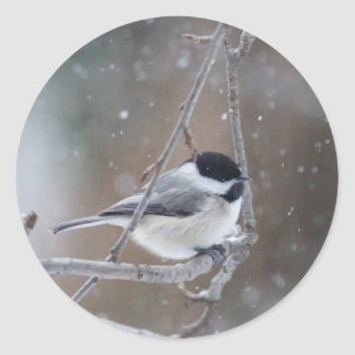 Black-capped Chickadee - Songbird Classic Round Sticker
