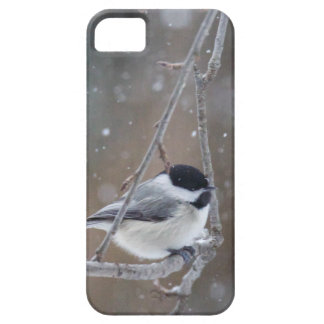 Black-capped Chickadee - Songbird iPhone 5 Case