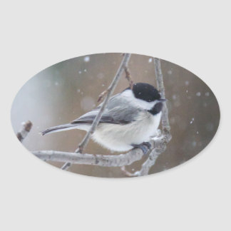 Black-capped Chickadee - Songbird Oval Sticker