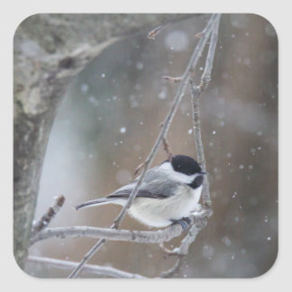 Black-capped Chickadee - Songbird Square Sticker