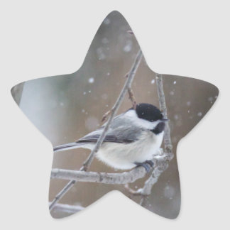 Black-capped Chickadee - Songbird Star Sticker