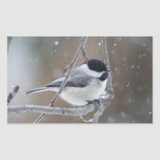 Black-capped Chickadee - Songbird Sticker
