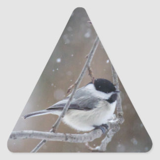 Black-capped Chickadee - Songbird Triangle Sticker