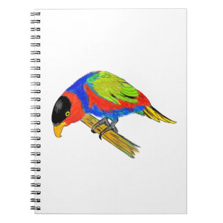Black-capped Lory Notebooks