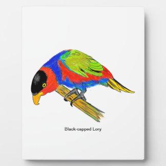 Black-capped Lory Plaque