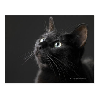 Black cat against black background, close-up postcard