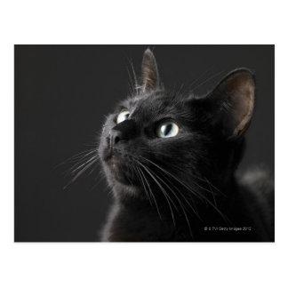 Black cat against black background, close-up postcard