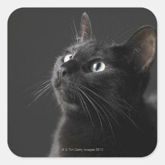 Black cat against black background, close-up square sticker