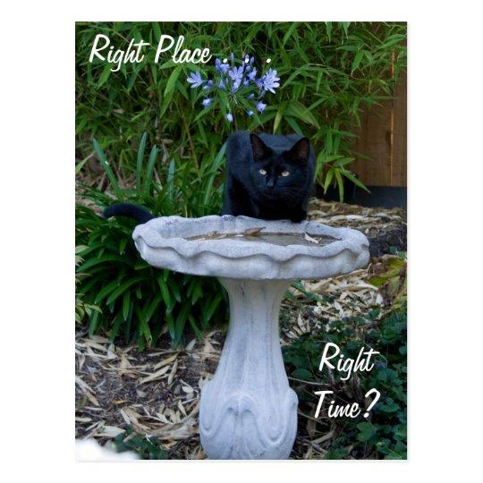 Black Cat Birdbath Postcard