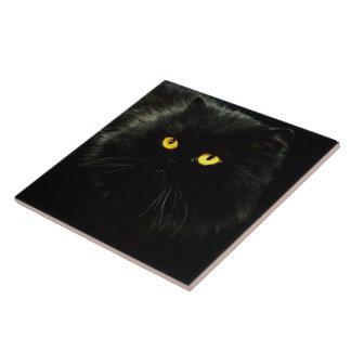 Black Cat Ceramic Tiles
