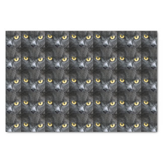 Black Cat Eyes Tissue Paper