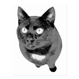 Black Cat Good Luck Postcard